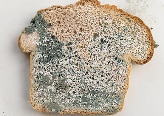 Is it safe to eat moldy bread by removing the moldy part ...