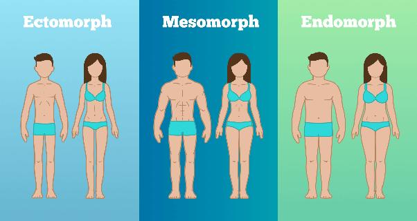 How to get larger arms as an ectomorph - Quora
