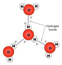 How many hydrogen bond a water molecule can form? - Quora