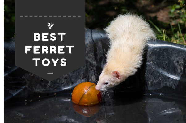 What are some homemade ferret toys? - Quora