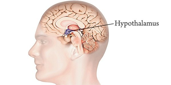 What Is The Link Between The Nervous And Endocrine Systems Quora