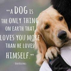 I love dogs so much