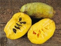 What is a fruit name that starts with P and with six letters? - Quora
