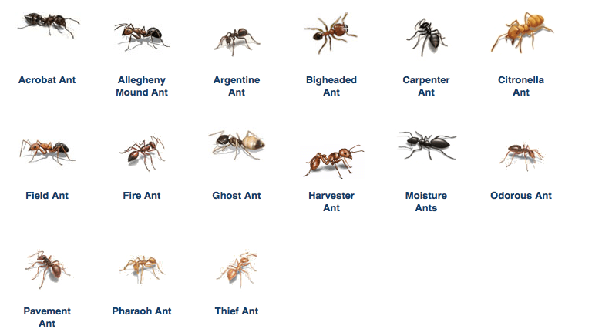 Strange How To Get Rid Of Ants On My Bed Quora Download Free Architecture Designs Jebrpmadebymaigaardcom