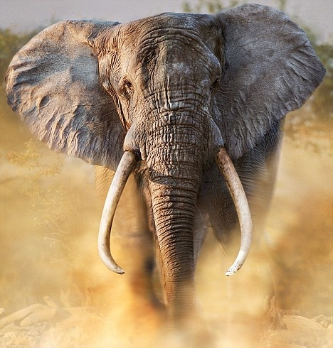 What is the strongest land mammal in the world? - Quora