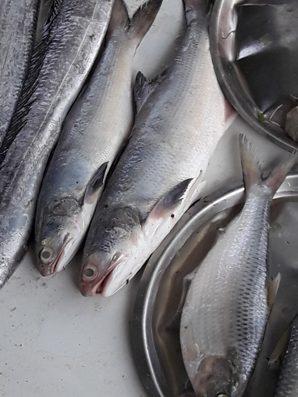 What is the Marathi name for salmon fish? - Quora