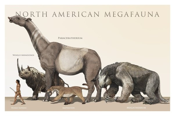 Dinosaurs lived around 100 million years ago humans appeared however something else evolved sweeping across the continents and wiping out most of the largest animals in addition to many of the smaller ones sciox Image collections