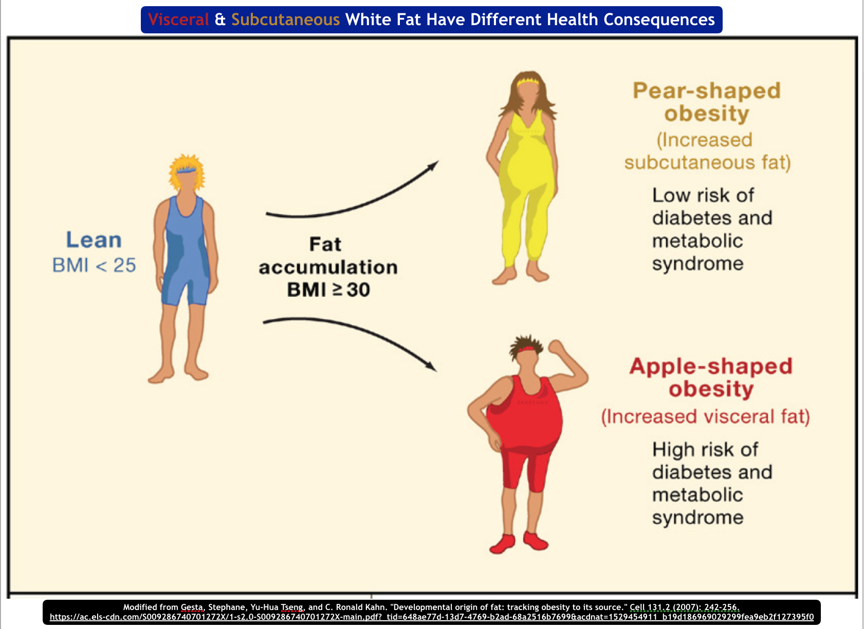 What determines whether you deposit subcutaneous or visceral fat