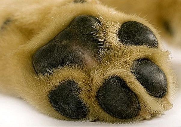 i cani hanno i pori della pelle