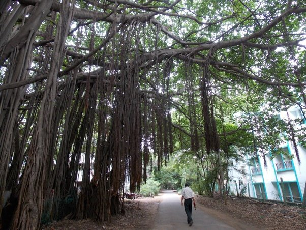 Can you share some IIT Madras campus photos? - Quora