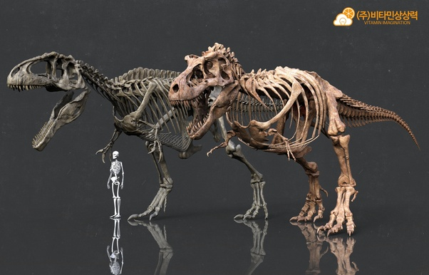 Who would win in a fight: Spinosaurus or T  rex? - Quora