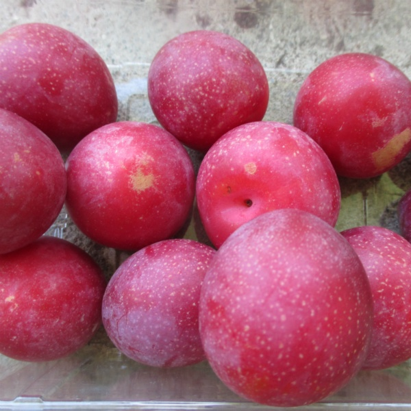 Which fruit is called the king of fruits? - Quora