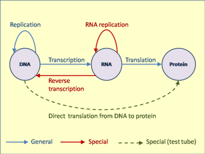 What is the primary function of dna in cells quora malvernweather Choice Image
