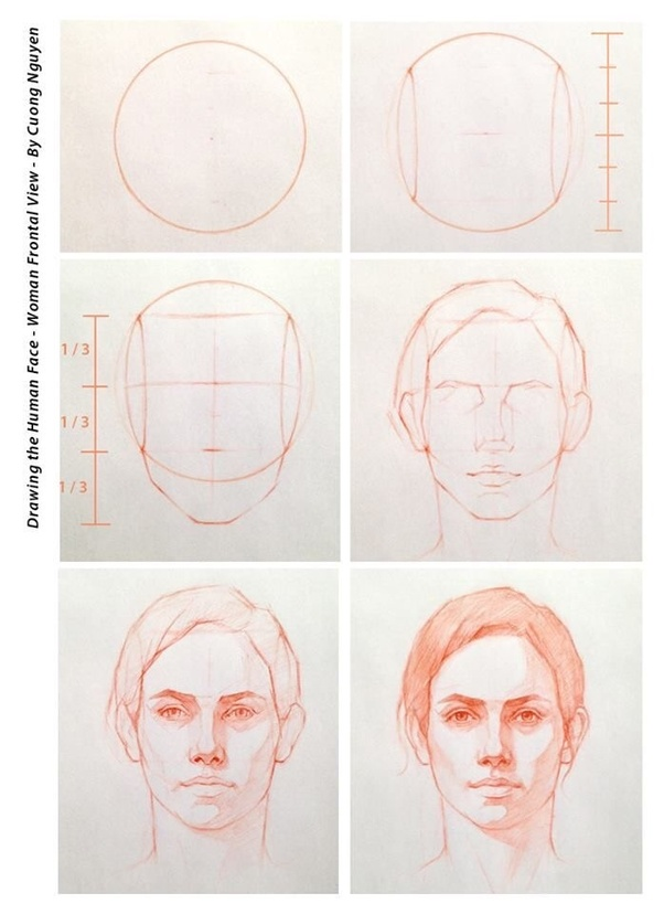 Formula to drawing faces of adults