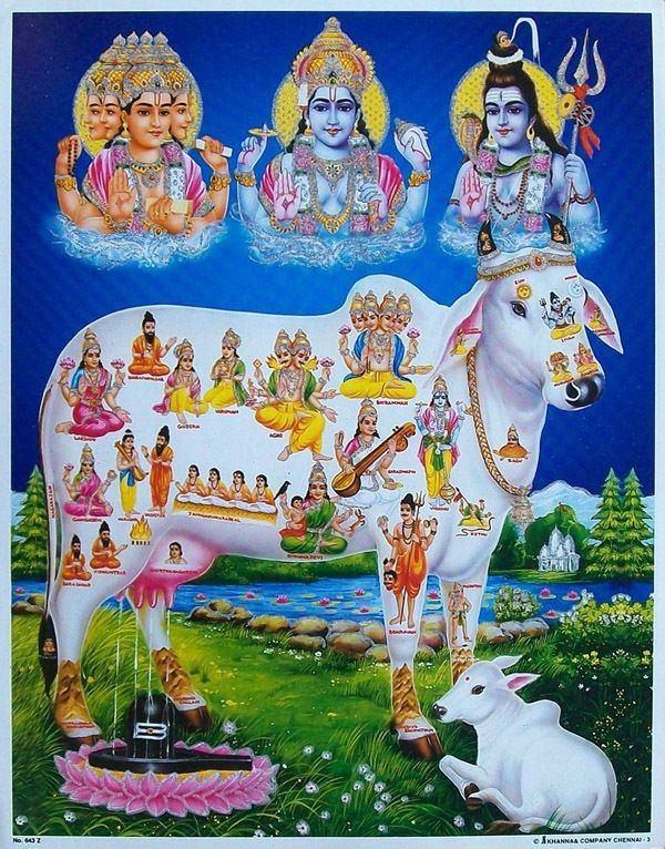 Port Edwards WI Hindu Single Men