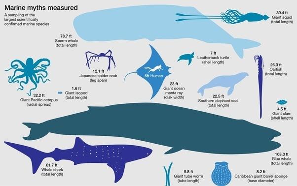 How To Prove Or Disprove This Aquarium Is In Bill Gates 39 House Quora