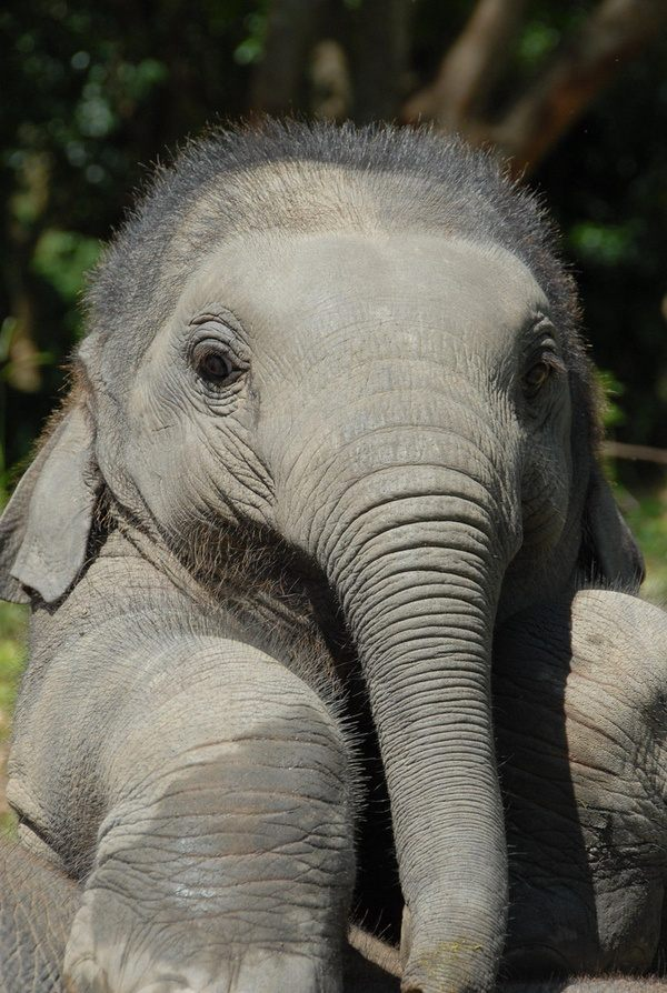 What Do Baby African Elephants Look Like - Quora-2569