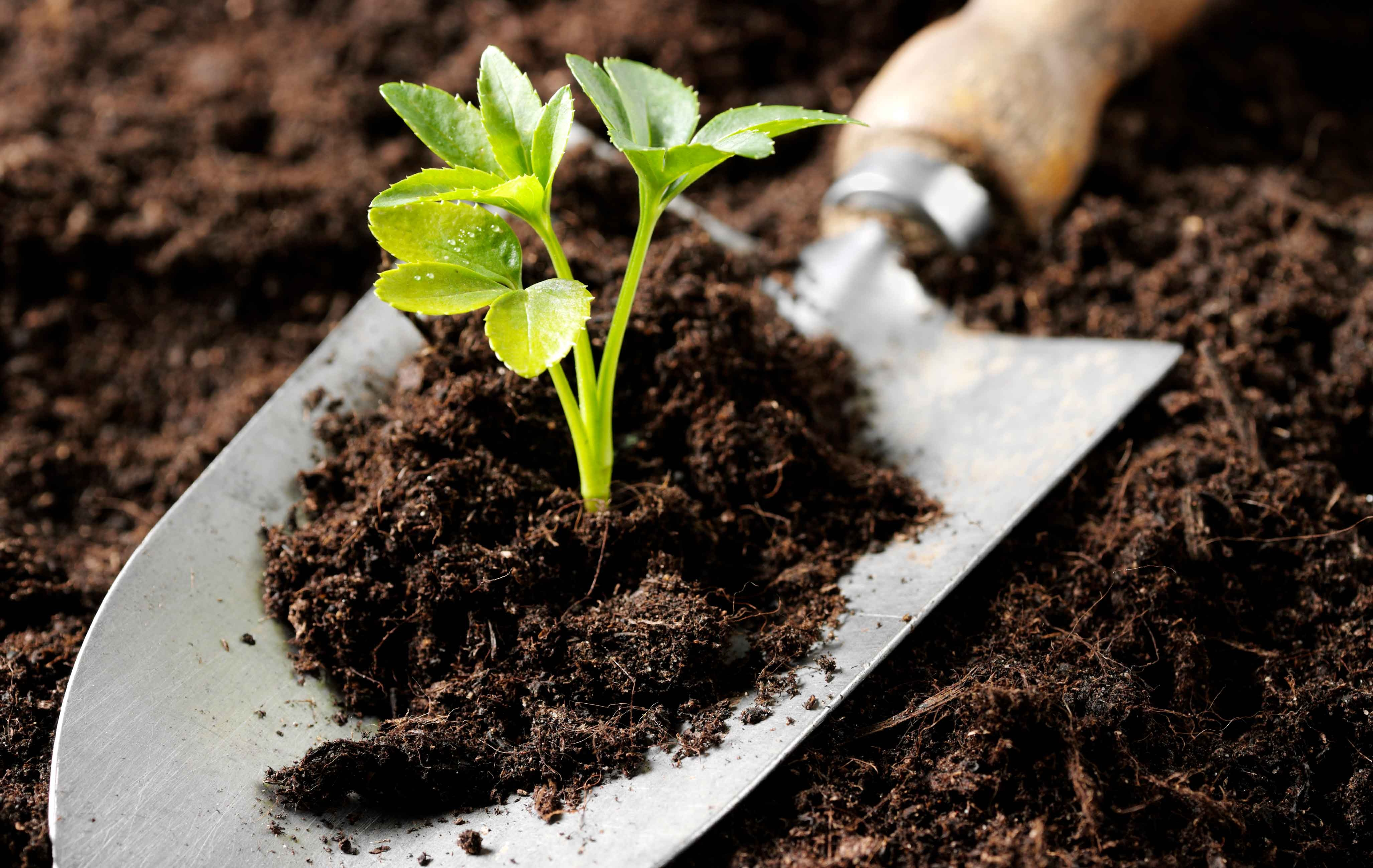 Products and Tools that you would need to tend to your Organic Garden
