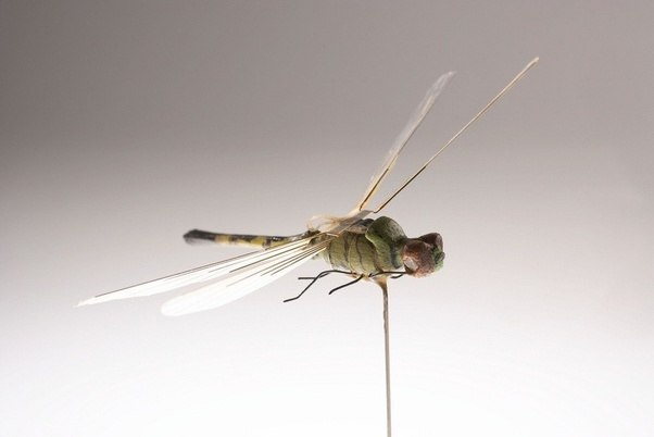 The Insectlike Drone Could Be Considered As An Extension Of Dragonfly Developed By CIA In 1980s And Currently Displayed Their Museum
