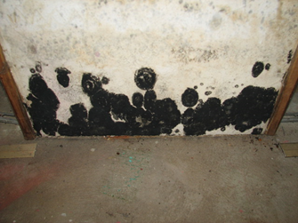 What Diseases Can Black Mold Cause