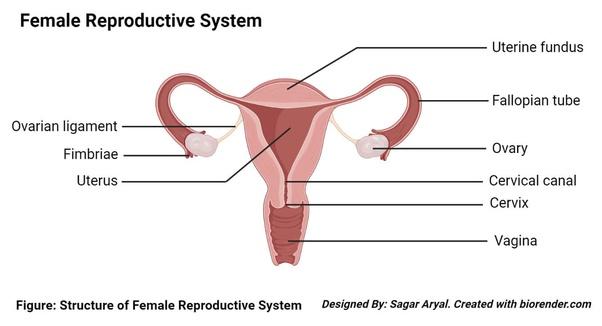 Guide periods mens to 14 Men