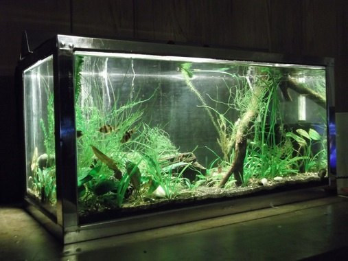 What is causing algae in a fish tank quora for White algae in fish tank