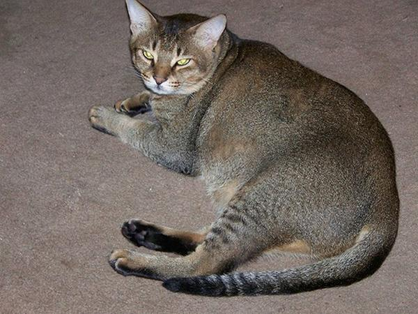 What Do Tabby Patterned Cats Look Like
