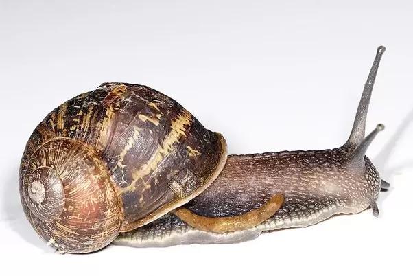 How Do Snails Poop Quora