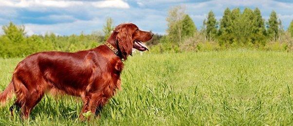 Image result for shiny dog