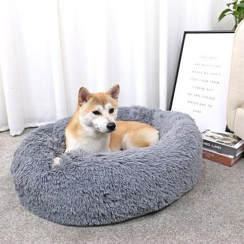 What is the cheapest place to buy dog beds online that look sweet ...