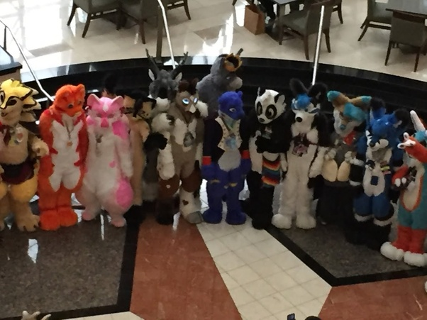 What are the most common species/type of fursona? - Quora