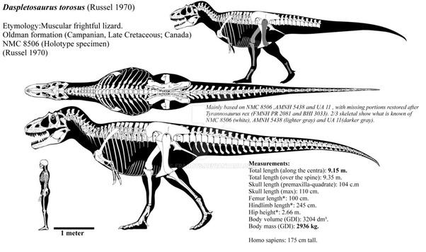 Daspletosaurus and gorgosaurus are believed to have co ...