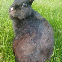 Why Do Some People Think That Rabbits Are Poor Choices For Pets Especially For Children Quora