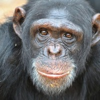Profile photo for Allan