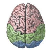 Consciousness Science